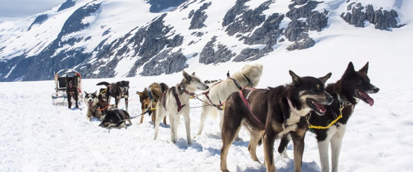 Alaska Dog Sledding Excursion Picture