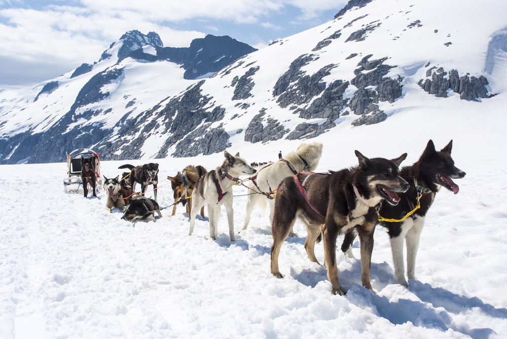 Dog Sledding Cruise Excursion in Juneau, Alaska