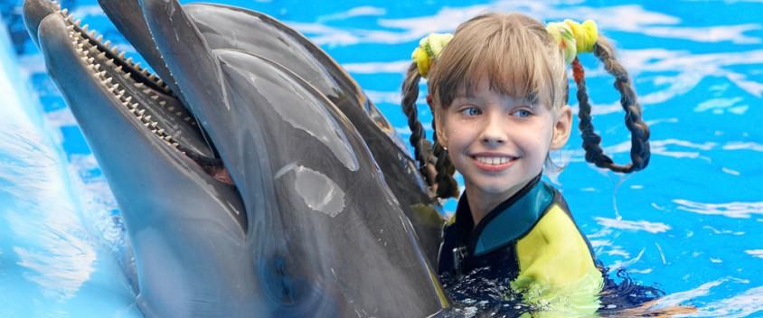 dolphin tours in Tortola photo