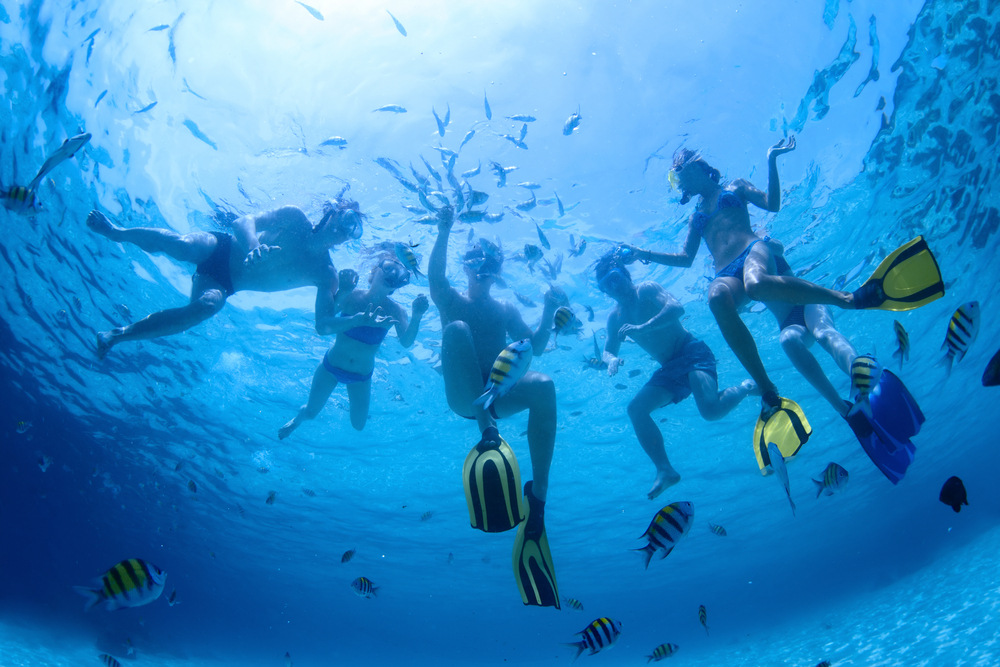 Snorkeling with Fishes - About Shore Excursions