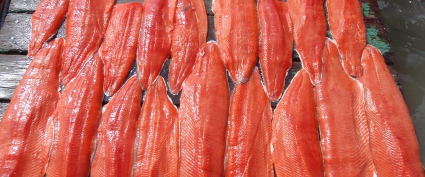 alaska salmon image