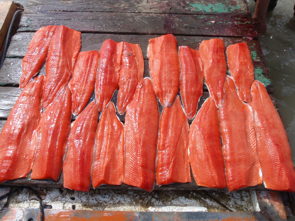 Gold Creek Salmon Bake Cruise Excursion in Juneau, Alaska