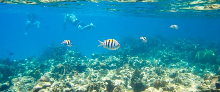 roatan snorkeling photo