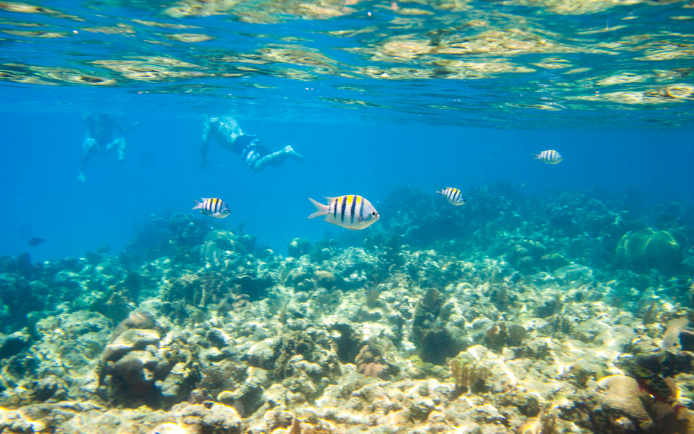 Snorkeling Day Tour in Roatan, Honduras - Shore Excursions Group