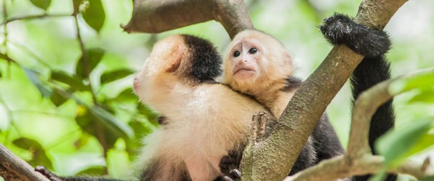 Roatan Shore Excursion Monkeys
