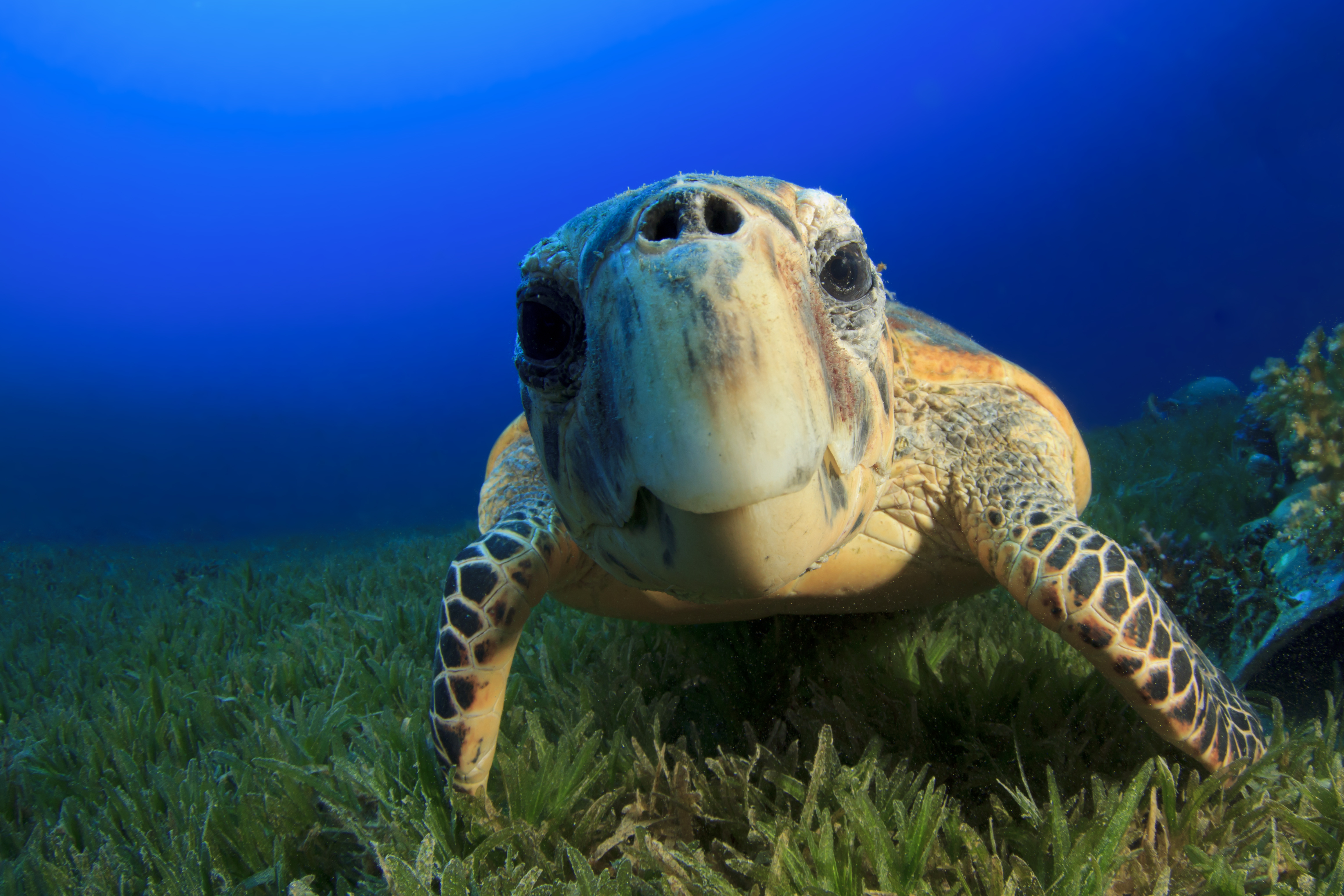 Swimming with Sea Turtles Cruise Excursion
