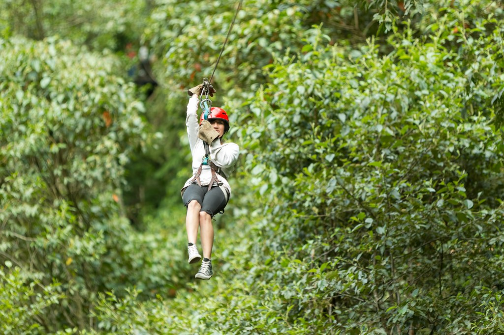 Ziplining Shore Excursion - What to Expect