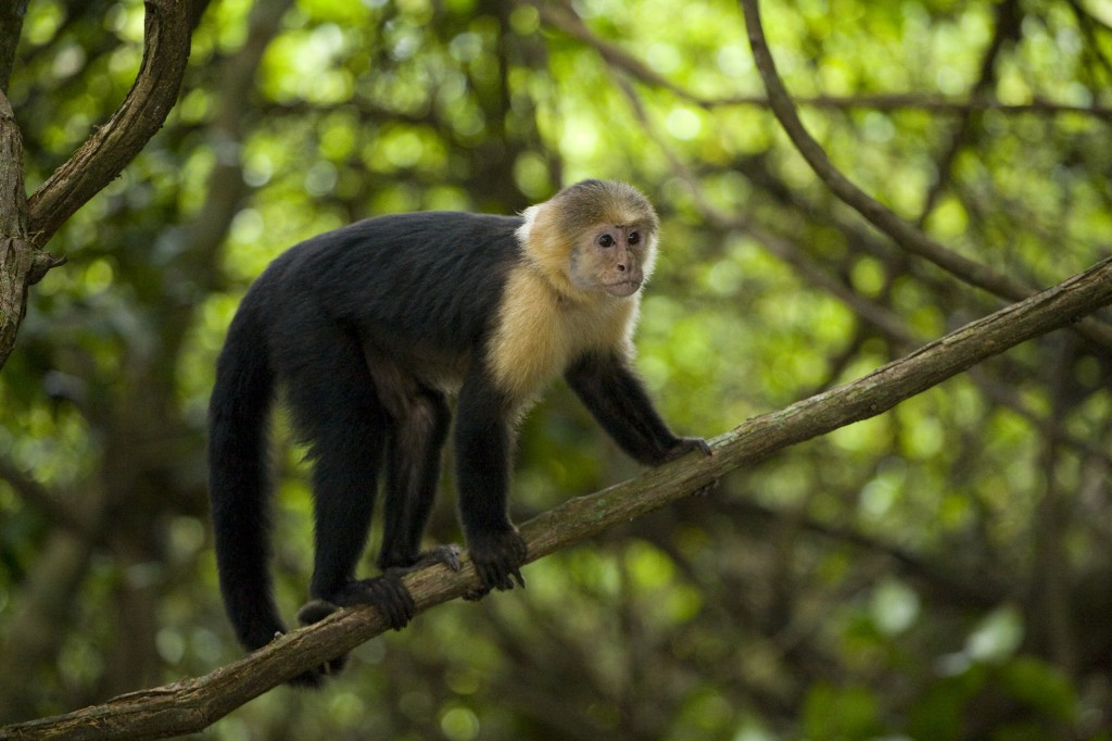 Spider Monkey Roatan Day Trip - Shore Excursions Group