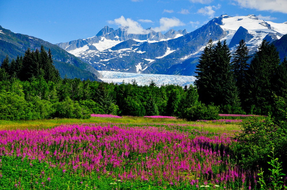 Beautiful Nature Landscape in Juneau, Alaska - Shore Excursions Group